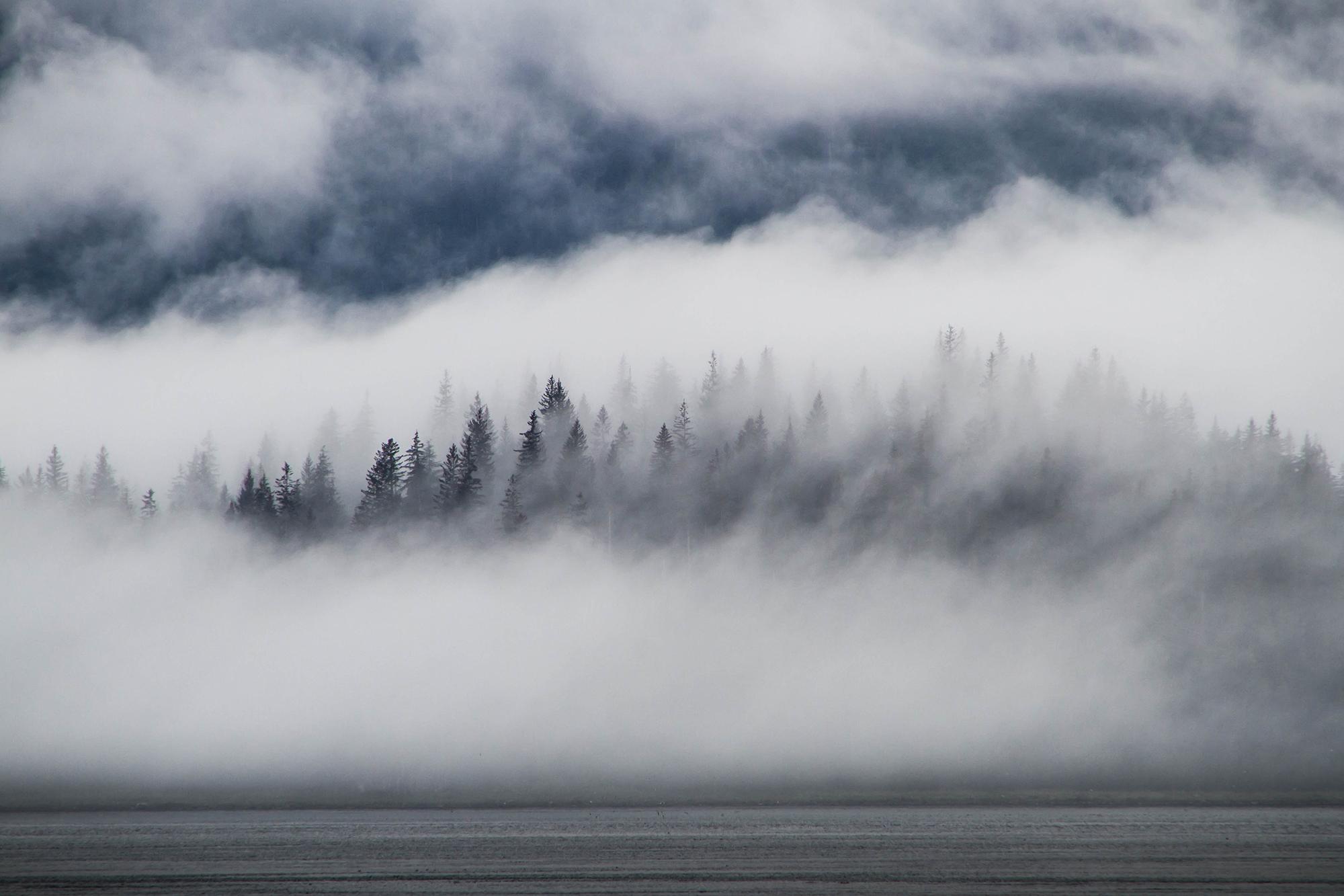 A black coniferous treeline peeks through thick, white fog.